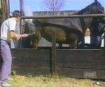 vidéo karate horse cheval marque fer coup de patte