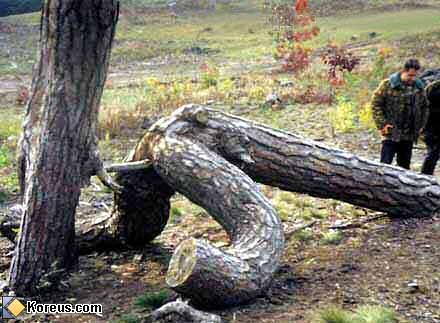image drole nature