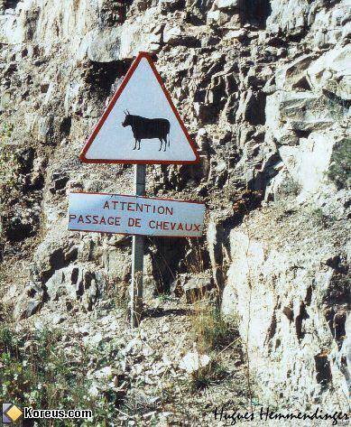 image pancarte panneau insolite attention passage de chevaux boeuf