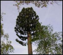 pps powerpoint humour insolite arbre antenne décoration 25m intégration décor
