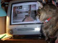 image chats projet du chat à infini the infinite cat project