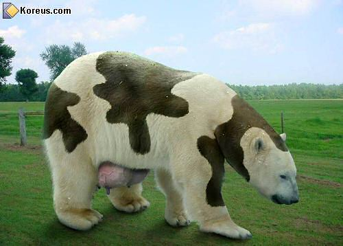 Animaux insolites image - Photo de vache drole ...