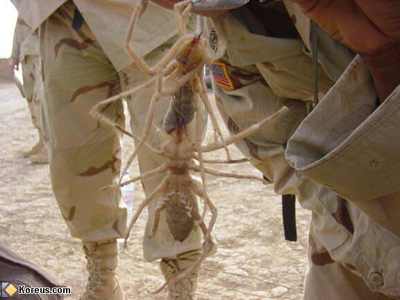 ARZHAL !! le retour du psycho Camel_spider