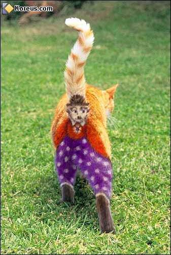 image chat déguisé pour halloween peinture sur poil humour insolite