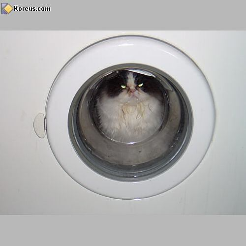 image chat dans la machine a laver humour insolite