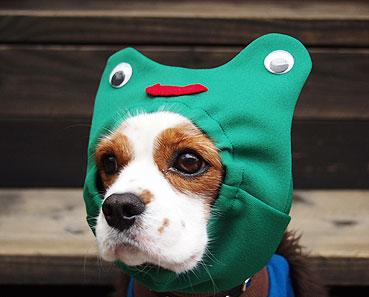 habit pour chien cagoule