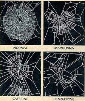 image humour expérience sur des araignées toile bizarre insolite