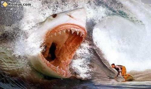 Les attaques de requin à l'ile de la Réunion Requin
