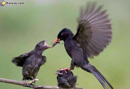 image rigolo oiseaux humour insolite