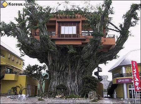 image rigolo cabane maison dans arbre humour insolite