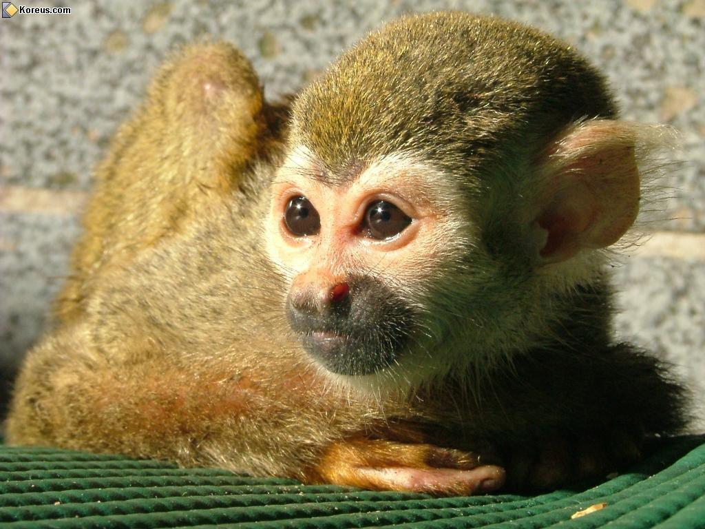 image petit singe animal animaux humour insolite