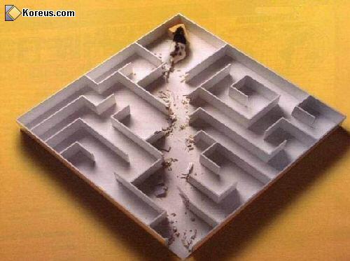 image rire souris labyrinthe humour insolite