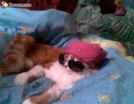 image rire chat lunette star humour insolite